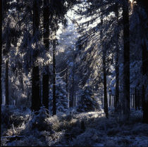 Blue forest von Intensivelight Panorama-Edition