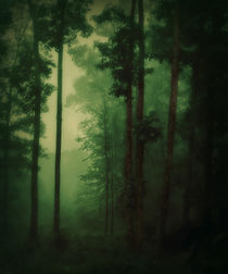 Green-fog-forest