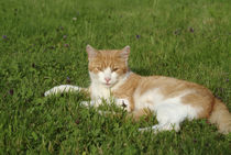 Cat704-3