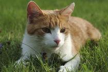 Cat704-6