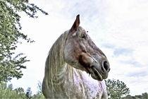 Pferd-013-n