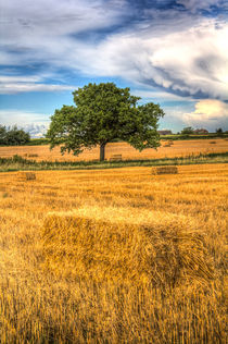 The solitary farm tree by David Pyatt
