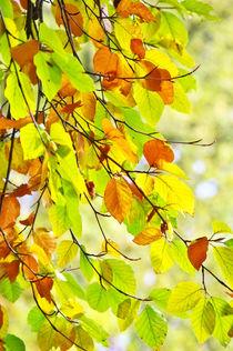 Buchblätter im Herbst by AD DESIGN Photo + PhotoArt