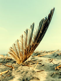 Feather-asa-beach