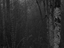 Dark Mountain Forest von Katherine Manning