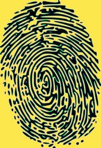 Finger Tip Tale von Florian Rodarte