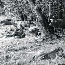 EIFEL LIONS von © Ivonne Wentzler