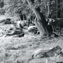 EIFEL LIONS by © Ivonne Wentzler