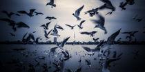 Hamburg gulls by moxface