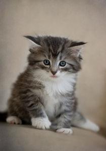 Dsc9076-dot-nw-kitten-08-13