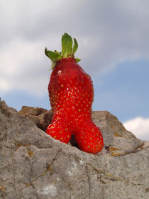 Erdbeere im Gebirge (Spitzenposition), strawberry in mountains,on the top von Dagmar Laimgruber