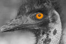 Ostrich head von robert-boss