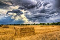 Late Summer on the farm by David Pyatt
