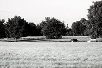 Feldsamen by Bastian  Kienitz