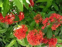 Blume-10-bali
