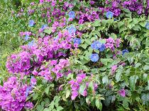 Blume-11-bali