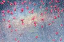 BLOSSOMS RAIN by © Ivonne Wentzler