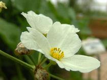 Blume, Blüte by Christian Haberäcker