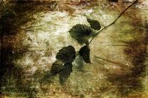 A Little Nature von Randi Grace Nilsberg