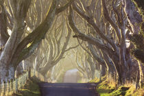 Misty morning at the Dark Hedges by Horia Bogdan