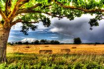 The Field Beyond The Tree by David Pyatt