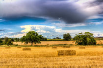 The Summer Farm View by David Pyatt