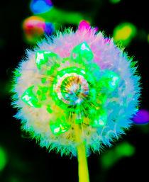 'Natur Abstrakt  37 Pusteblume,' by Walter Zettl