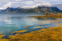 Arctic Circle Paradise by Maciej Markiewicz