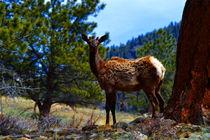 Elk and Sky  by Ellen Bollinger