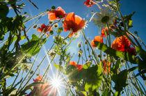 Sunny summer mix by Victoria Savostianova
