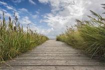 Der Weg zum Meer by Beate Zoellner