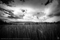 Scotland B/W by Kiara Black