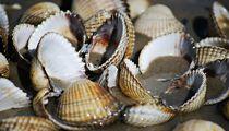 Shells-11