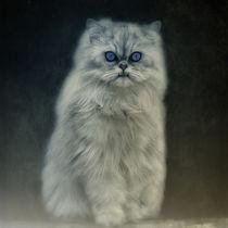The Cat von AD DESIGN Photo + PhotoArt