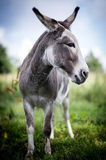 Donkey - Esel III by Ruby Lindholm