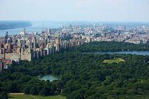 New-york-city-concrete-jungle-5