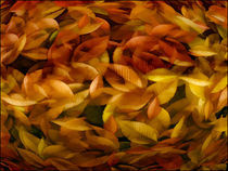 Fallen Leaves by tomyork