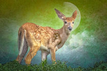 Portrait-of-a-fawn-2
