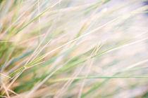 Gräser II von Ruby Lindholm