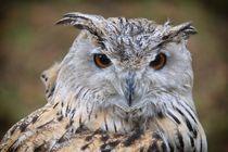 Sibirischer Uhu - Owl - Eule by Jörg Hoffmann