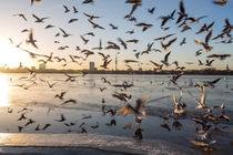 Hamburg gulls by moxface
