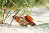 Muschel Träume von Tanja Riedel