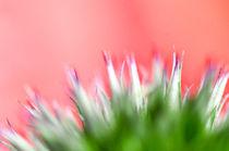 Blüten von Gabriele Brummer