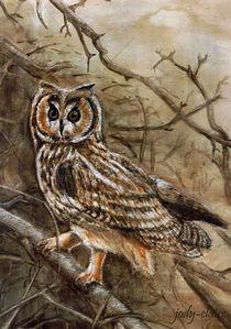 Owl by Verena Münstermann