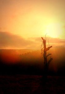 'abendlicht' von hedy beith