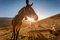 horse in marocco by moxface