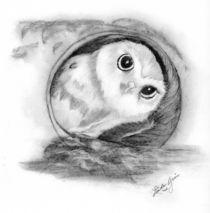 Saw Whet Owl by Linda Ginn
