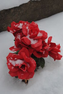 Snowy Red Petals, 2013 by Caitlin McGee