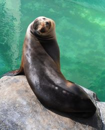 Sea Lion, 2013 by Caitlin McGee