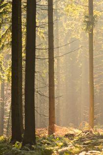 Eikamper Wald von © Ivonne Wentzler